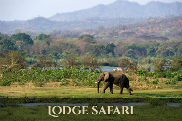 Malawi safari
